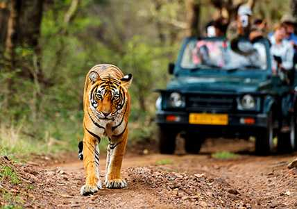 tiger tour in India